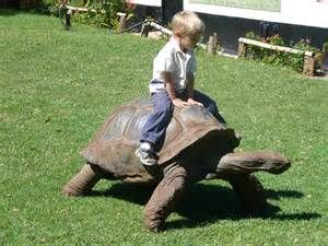Tortoise - Bing Images