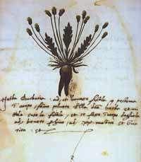 Urbino Alchemical? Herbal - early XVI Century - Herba Barbaria
