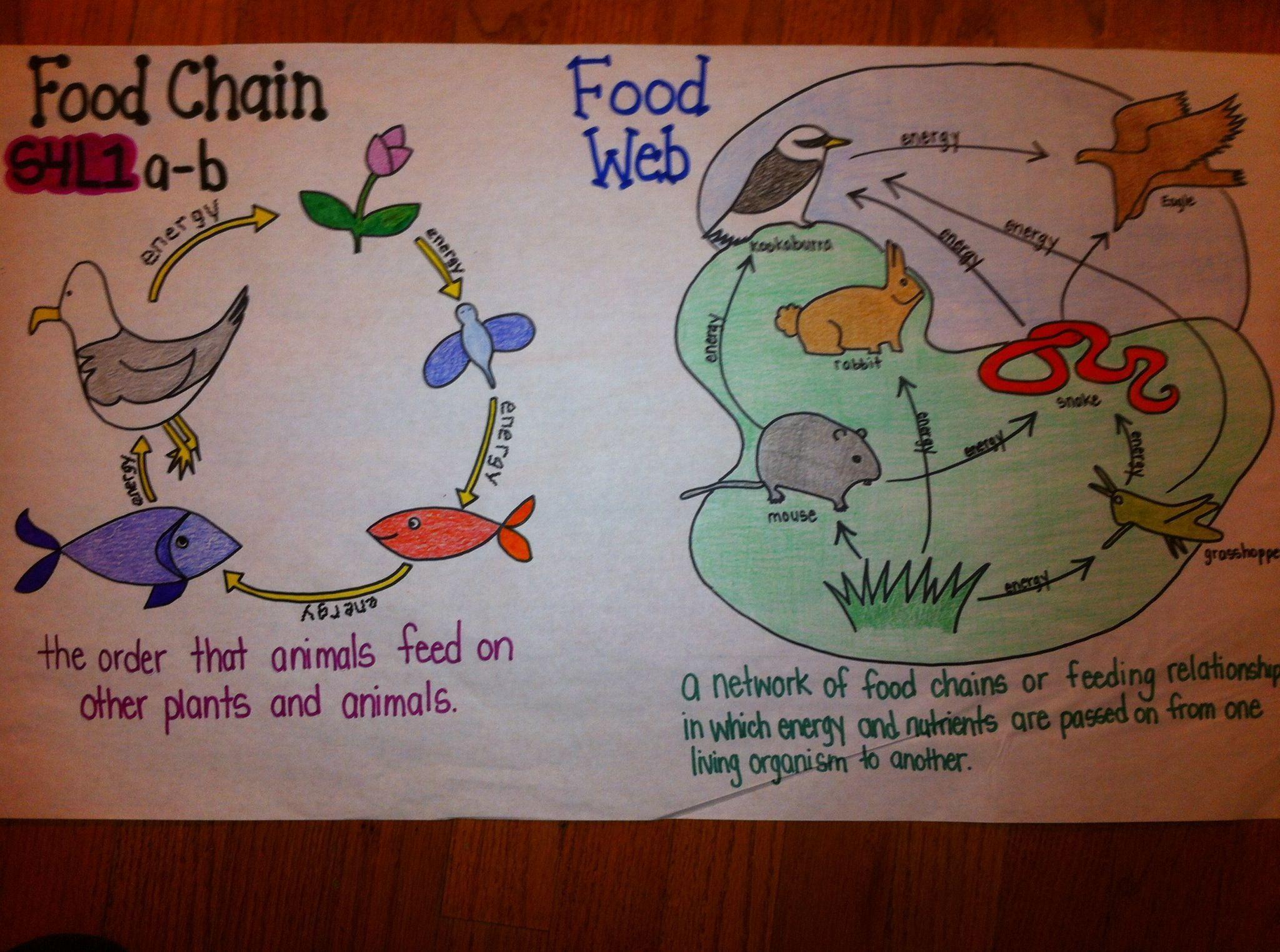 Food Chain Food Web Comparison Science Fourth Grade