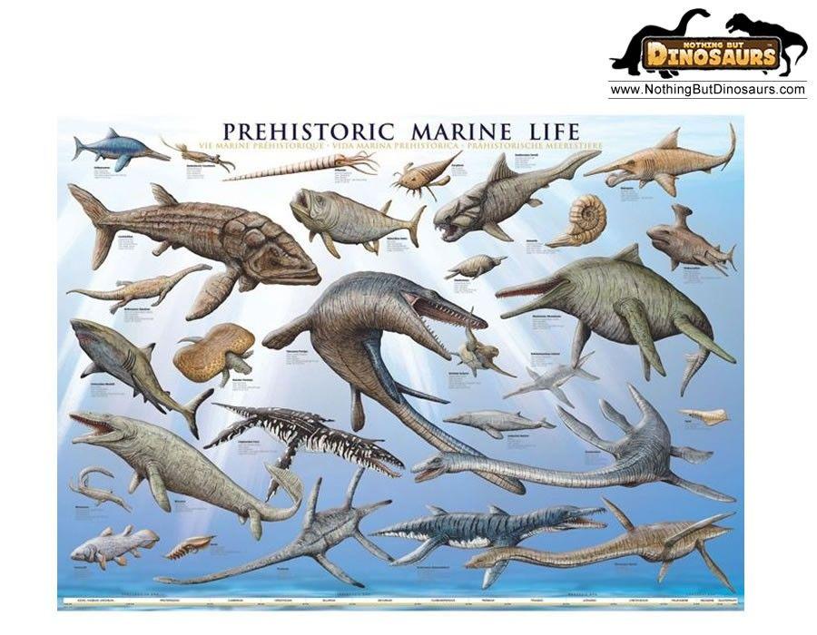 Water Dinosaur Names on Walking Water Experiement