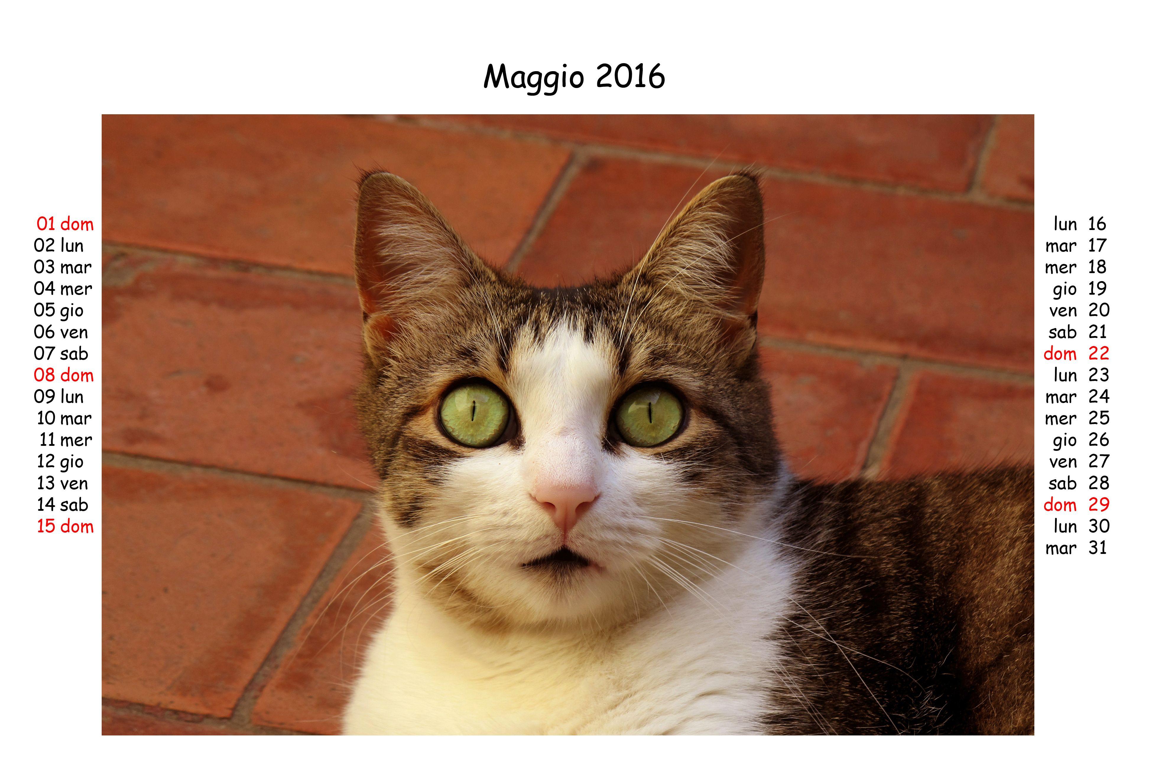 Maggio 2016 Crazy Cat People Cat People Cats