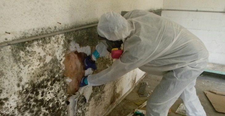 Mold Testing Moorestown