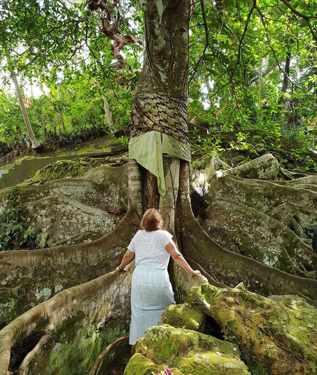 My beautiful friend @paolafontana paying her respects to this sacred old soul #sacredtree #ubud #bali #goagajah #quietmind #peacewithin #meditation #spiritualgrowth #spiritualjourney #heartandsoul #heartbliss #positiveinte www.amorescapes.com