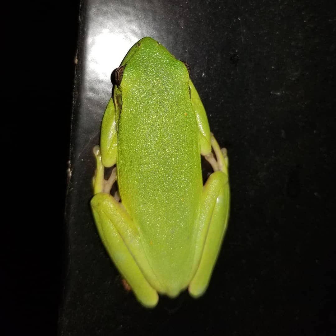 Mr Frog!