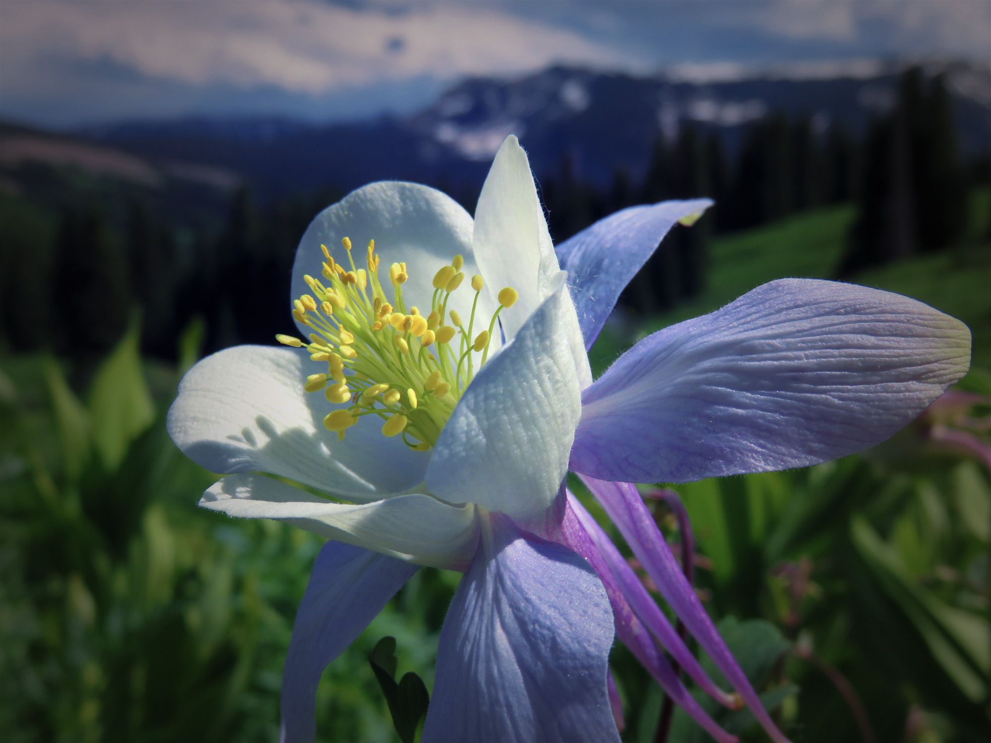 Columbine at 10000 ft.