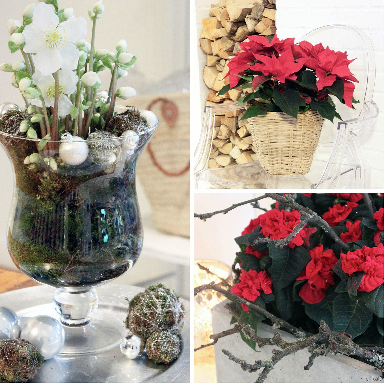 KUKKALA #joulukukat #christmasflowers