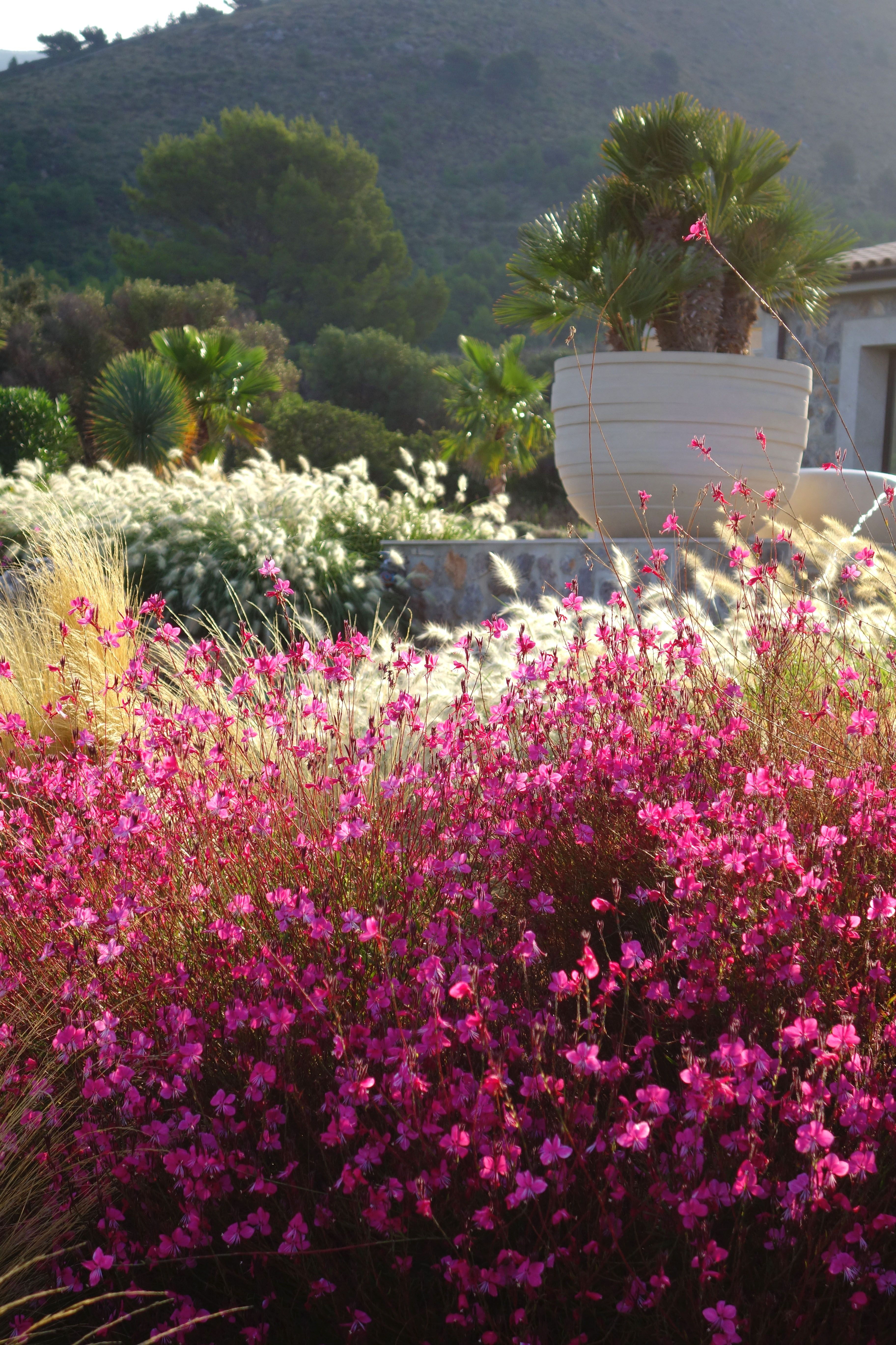 Mallorca Garden Jardines Flores