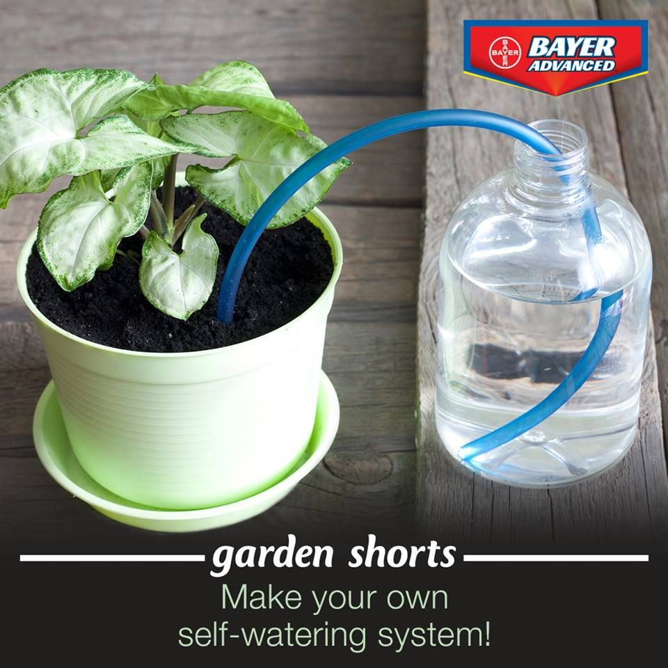 Automatic watering system for potted plants - Make Your Own Self Watering System