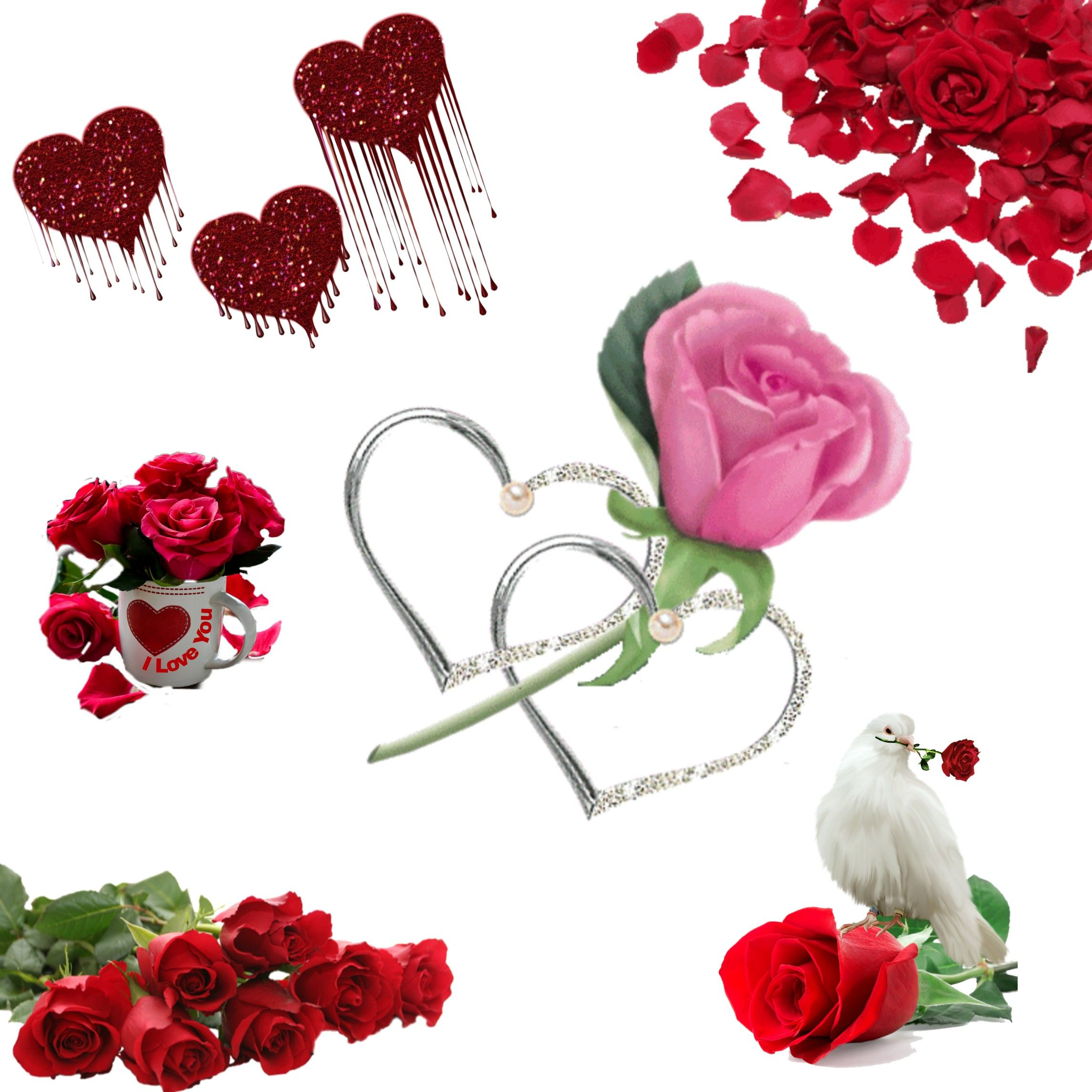 Pin By Adroja Kalpesh On Rose Flowers Rose Flower Creative Flowers