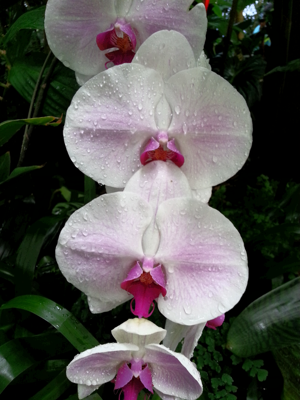 Orchid pic by sharonlgrace orchidaceae misc pinterest