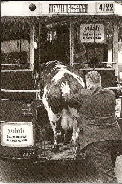 Photo of 21 Delightful Vintage Photos Of Animals
