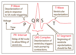 genesis of t wave in ecg pdf