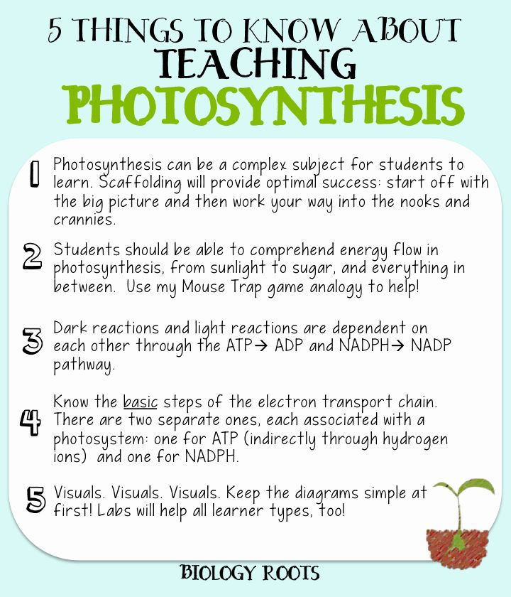 Photosynthesis Worksheet High School Lovely 5 Helpful Tips