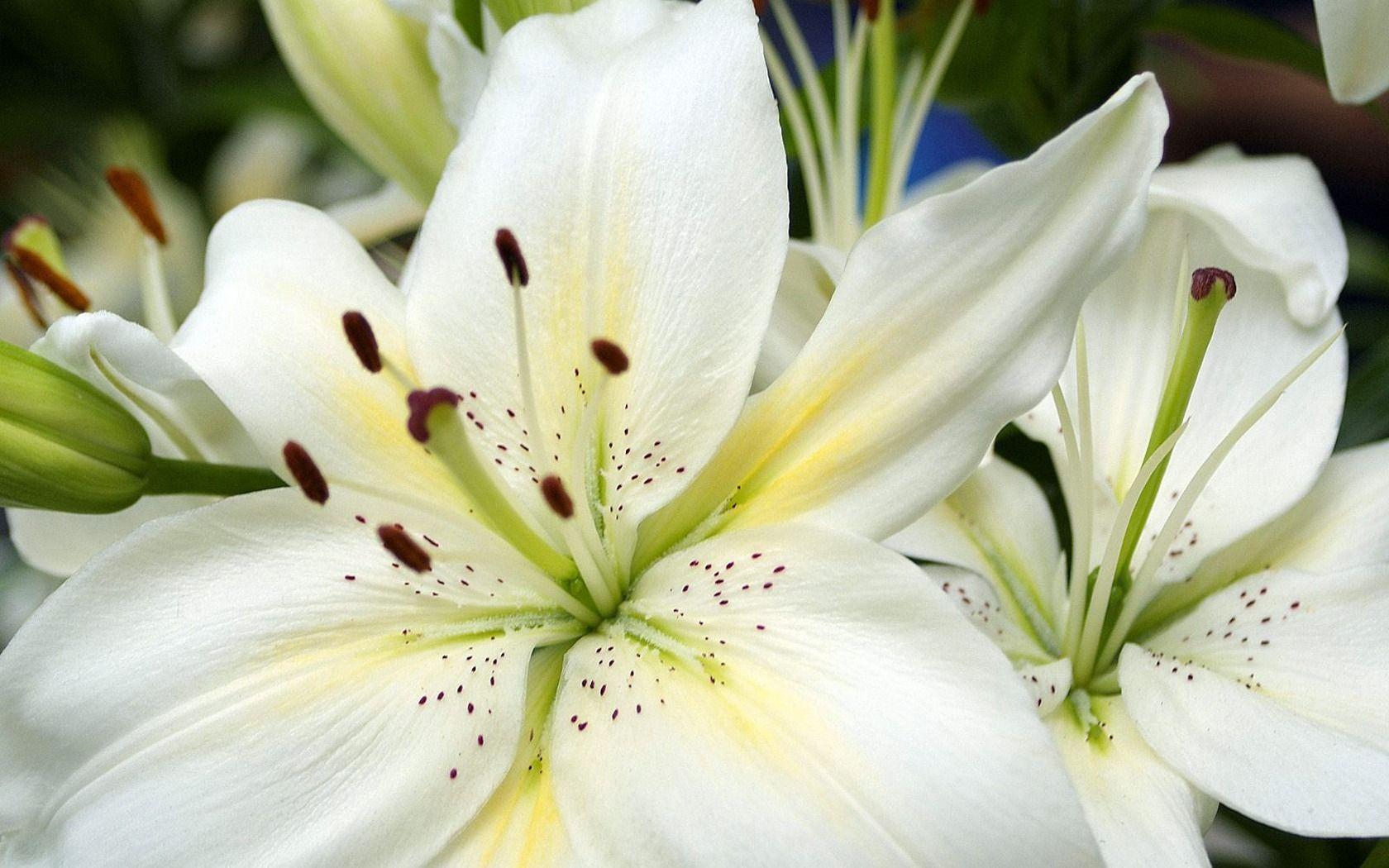 Imagini pentru white flowers fleurs pinterest white flowers imagini pentru white flowers mightylinksfo Image collections