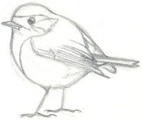 Les oiseaux en fiches coloriages photos et dessins avec - Dessin jolie et facile ...
