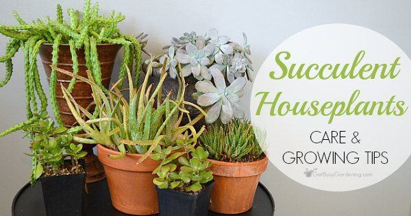 Succulent Plant Care Guide: How To Take Care Of Succulent Plants