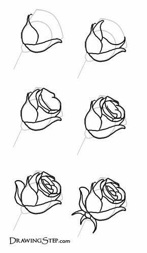 Rosenknospe Rosen Zeichnen Blumen Zeichnung Kurse Rose Malen