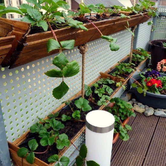 Container Garden Strawberry Planter Strawberry Garden Strawberry Planters Diy Container Gardening