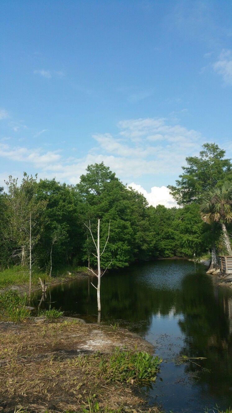 Entrance into bird rookery swamp near naplesflorida