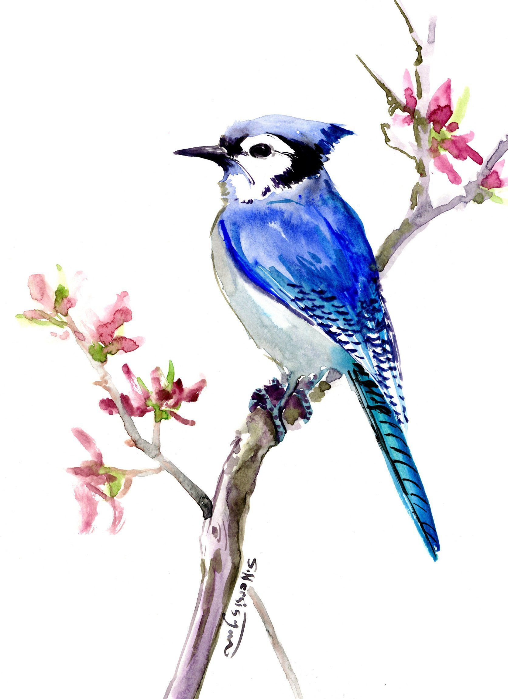 Blue Jay Original Painting Watercolor Blue Jay Artwork Blue