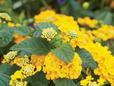 6 Heat Tolerant Plants You Need In Your Southern Garden | SouthernLiving