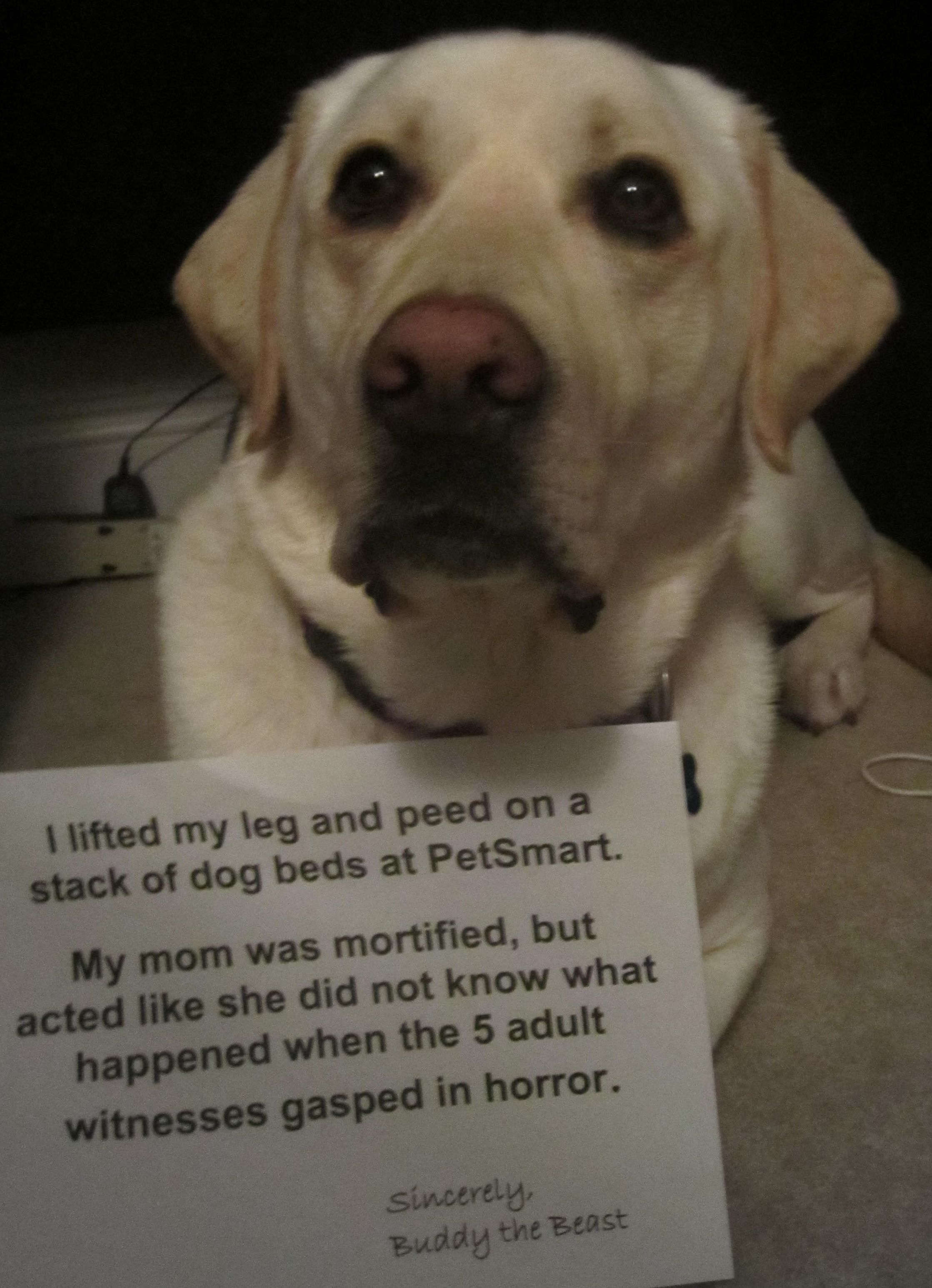 """""""I lifted my leg and peed on a stack of dog beds at"""