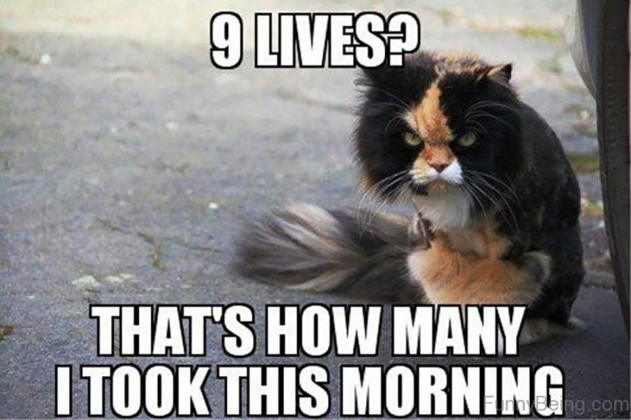 Relatable Funny Animal Jokes Funny Animal Memes Animal Jokes