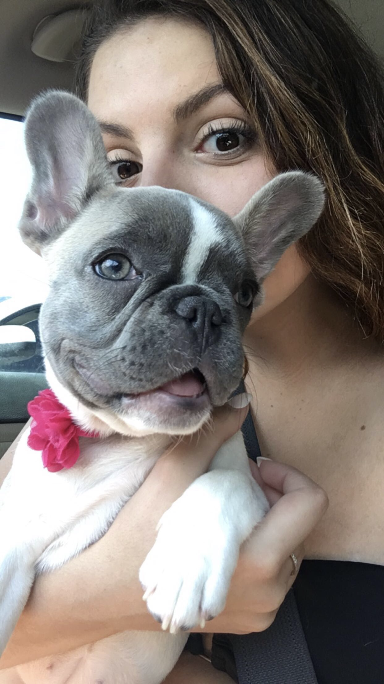 Pin by Tsveti Hristova on Cute french bulldog (With images