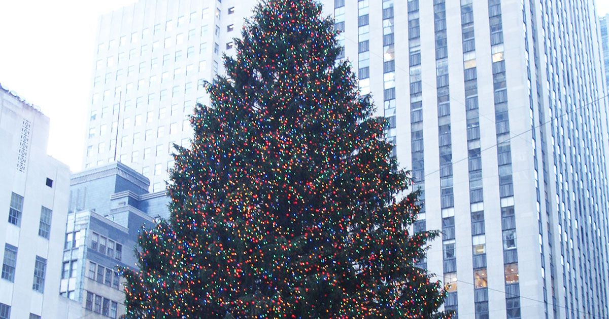 Did you know this year's tree is only six feet shy of the tallest tree in Rockefeller Center's history?