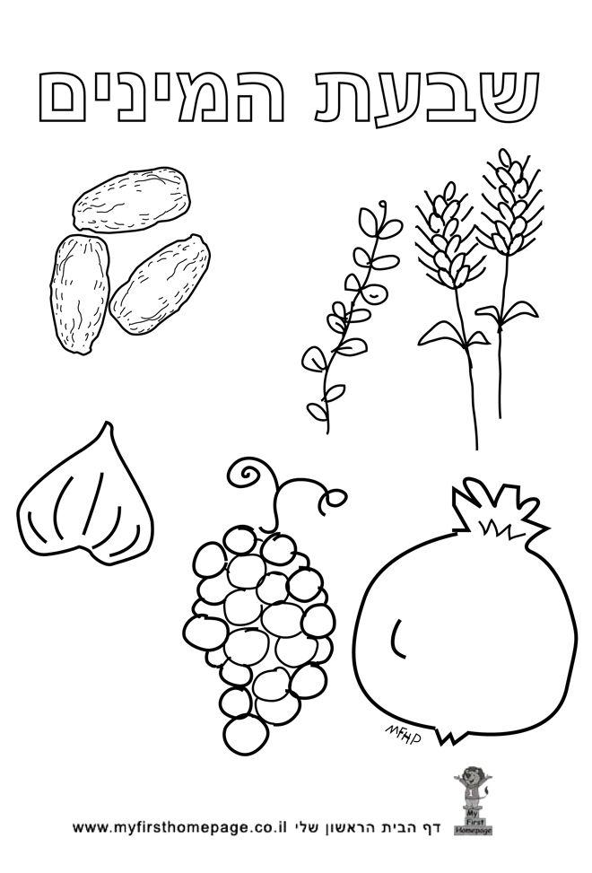 Tu b\'Shvat Hebrew Coloring Page – Shivat haMinim - 7 special foods ...