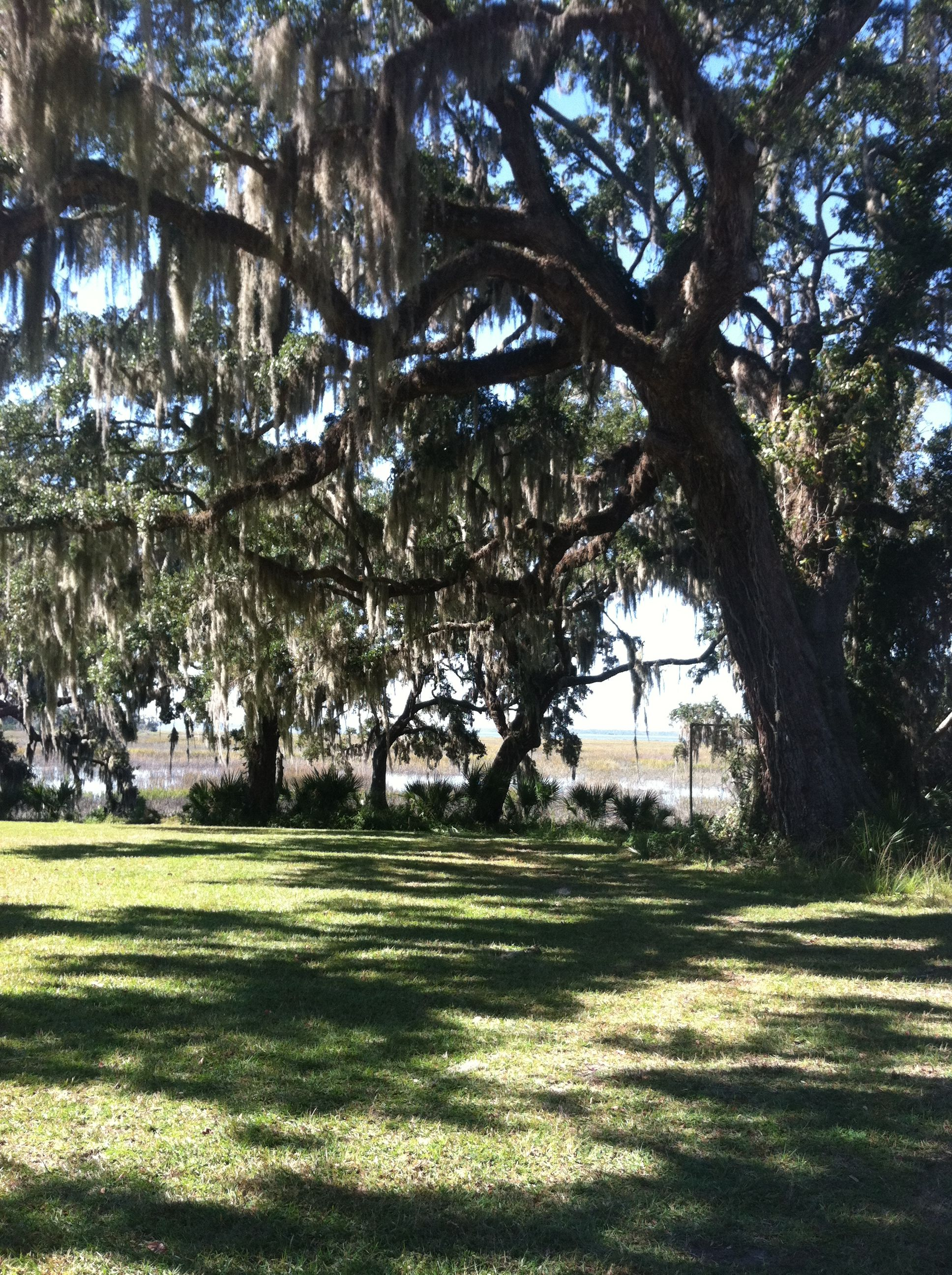 The Spanish moss and the breathtaking marsh. Come visit and experience the beauty of Beaufort, SC for yourself!