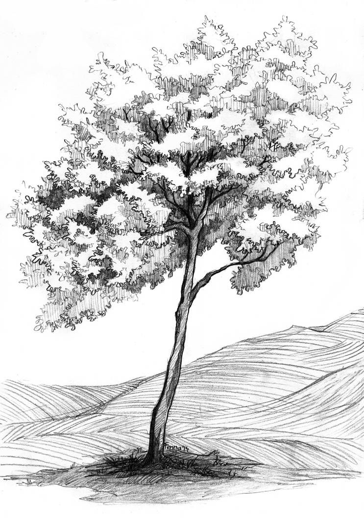 Tree and the line fields by fenna-maruda on Devian
