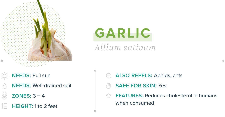homemade mosquito yard spray garlic