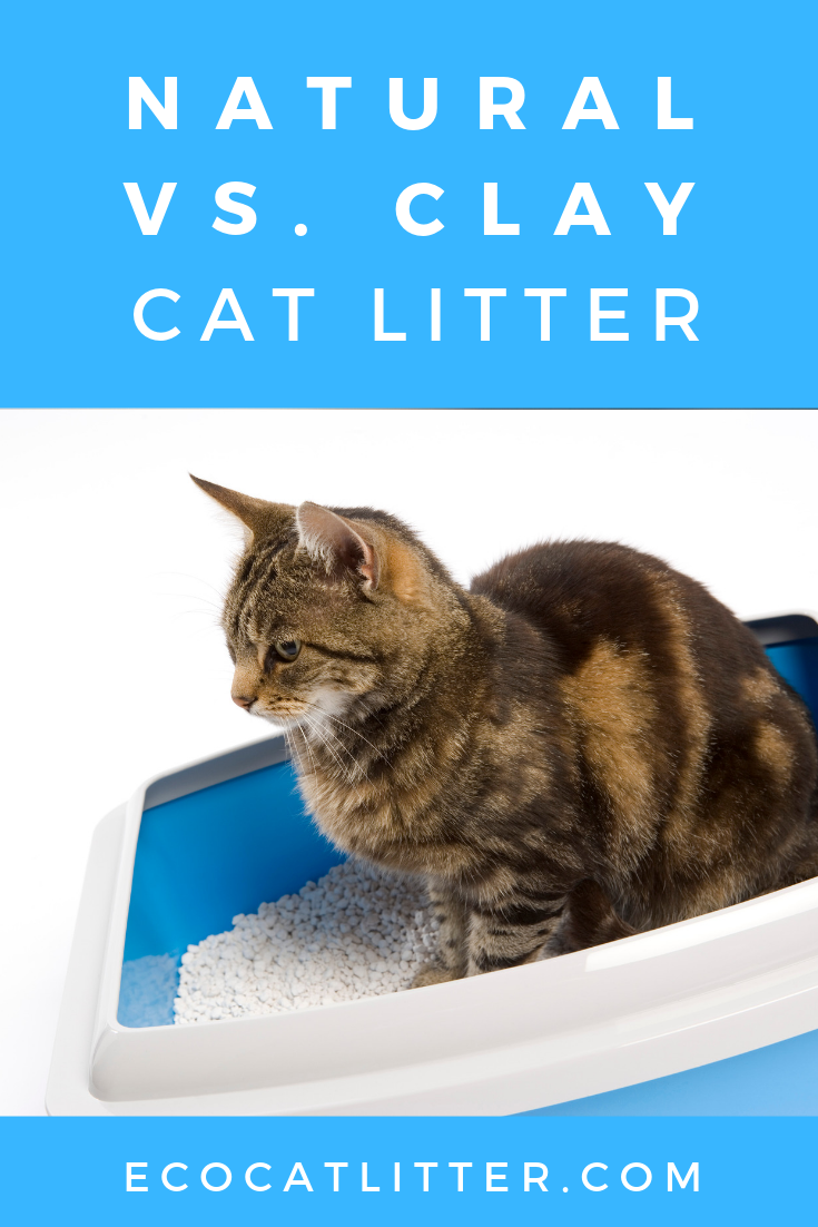 Natural Vs Clay Cat Litter Cat Training Litter Box Natural Cat Litter Clay Cat Litter