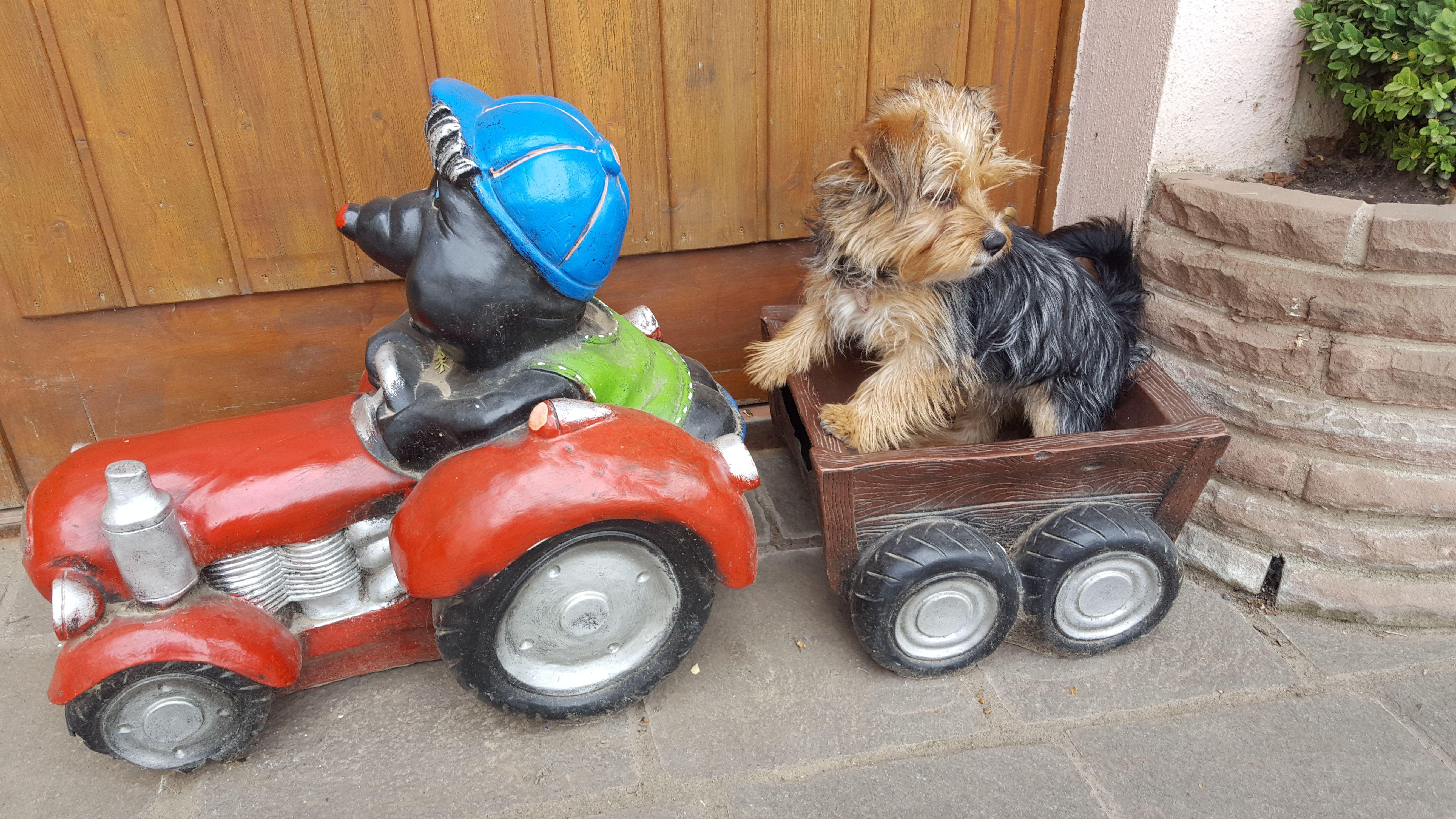 Hunde Foto: Heidi und Floh - Flöhchen on Tour Hier Dein Bild hochladen: http://ichliebehunde.com/hund-des-tages  #hund #hunde #hundebild #hundebilder #dog #dogs #dogfun  #dogpic #dogpictures