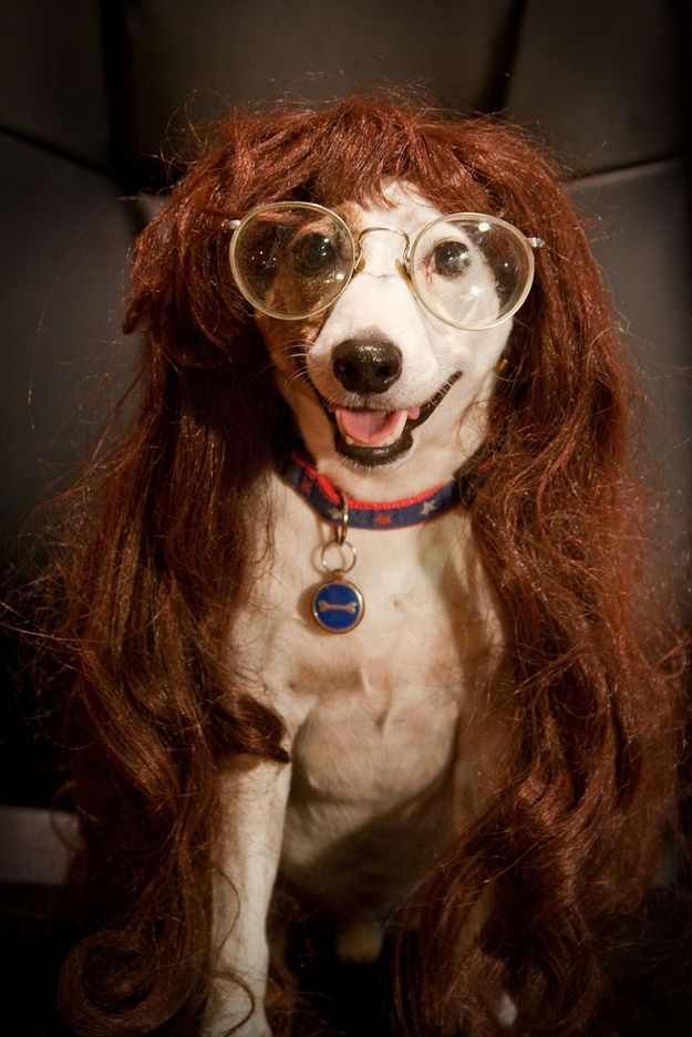 50 Hilarious Dogs In Wigs Dog With Wig Dogs Doing Funny Things