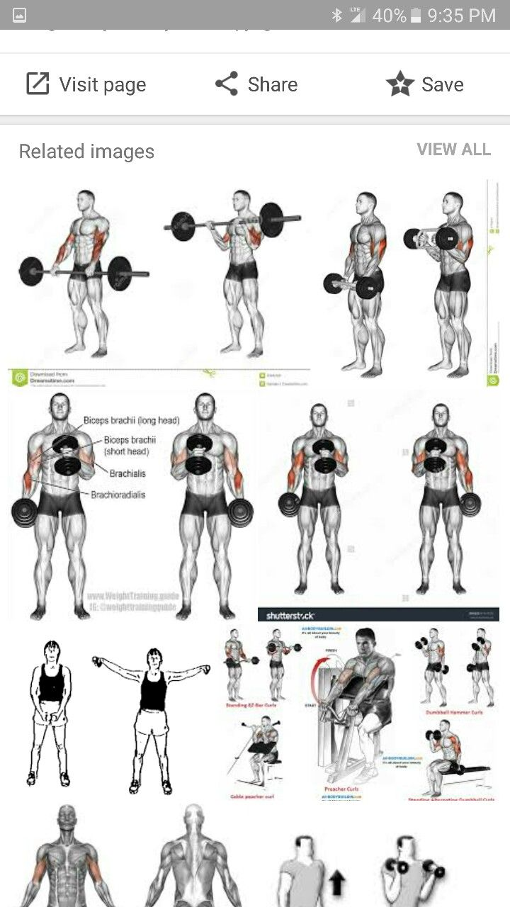 pin by glen absher on anatomy