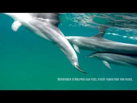 How to Swim with a Dolphin - The Dolphin Centre Ponta