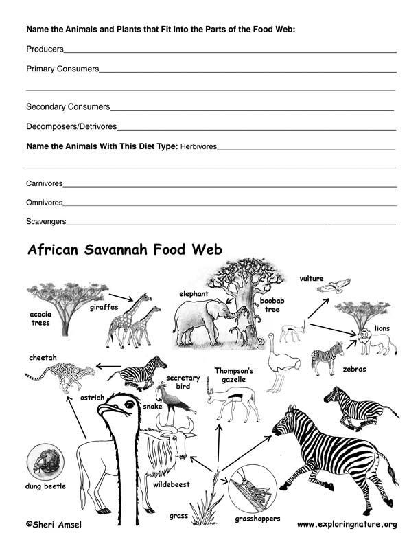 African Savannah Food Web Activity Science Ideas
