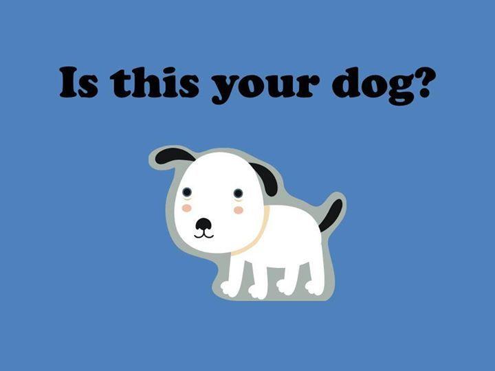 White german shepherd puppies mn