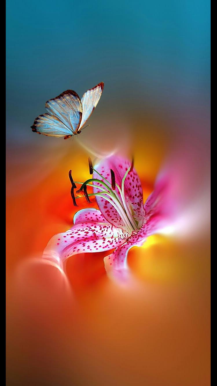 Natura Stupende Immagini Immagini Bellissime Sfondi