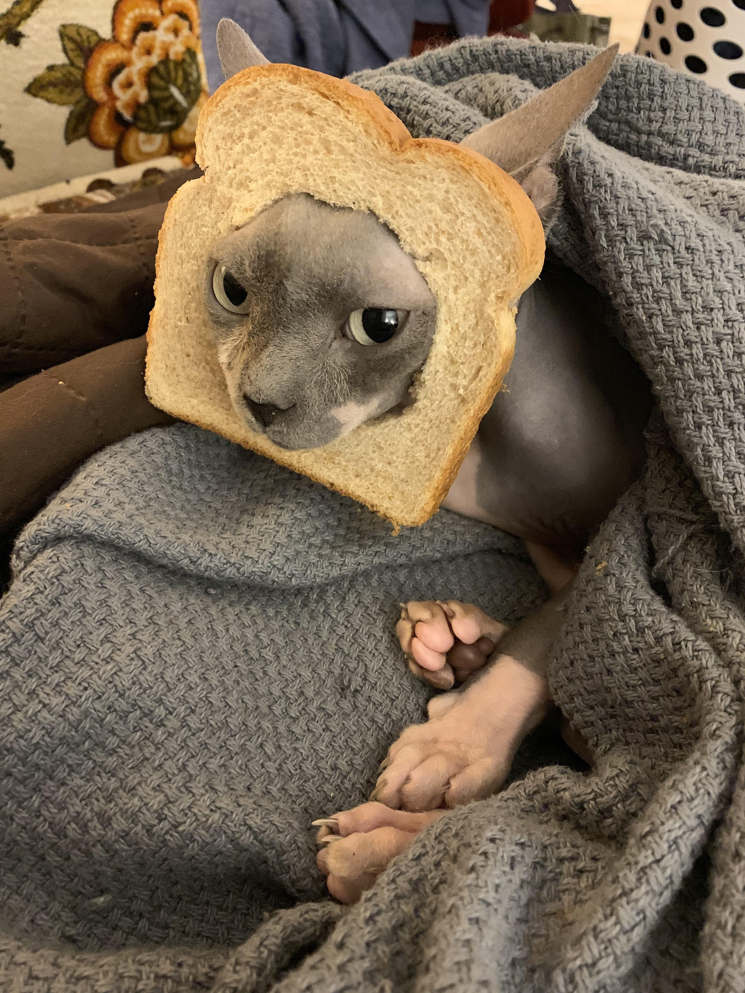 Ever seen a hairless cat breaded? Music IndieArtist