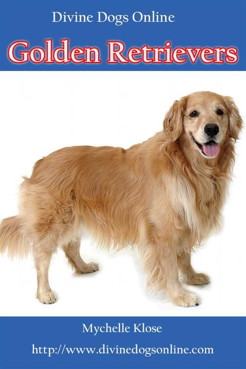 Shop Golden Retriever Dogs Online Cold Laser
