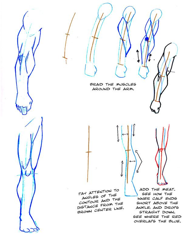 My Study In Anatomy Breaking It Down Into Shapes To Learn How To