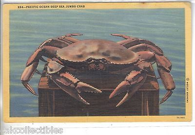 Pacific Ocean Deep Sea Jumbo Crab