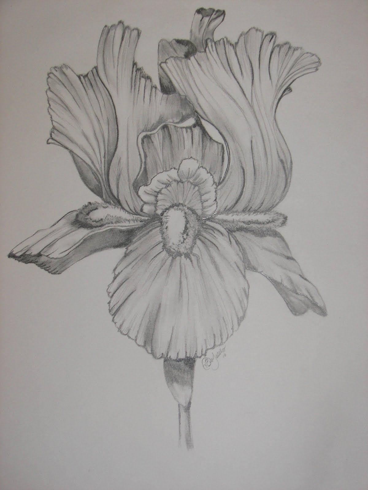 Drawing In Nature Iris Flower Tattoo