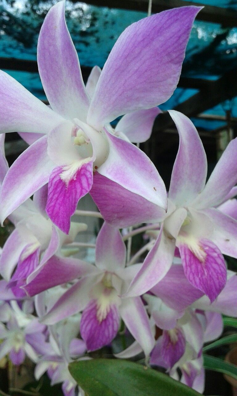 Orchids Strange Flowers Pinterest Orchid Rare Flowers And Flowers
