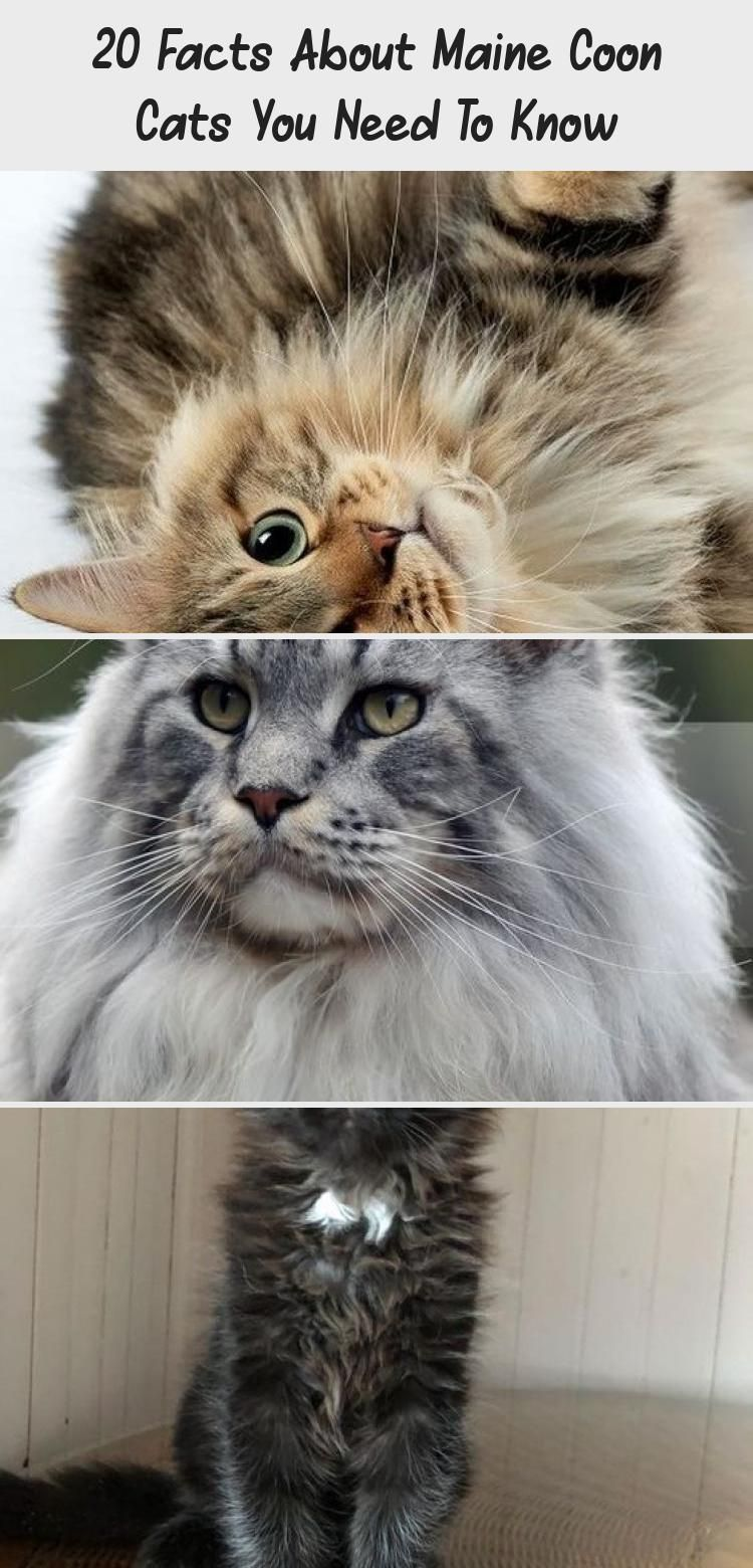My Blog En Blog In 2020 Gorgeous Cats Cats Kittens Cutest