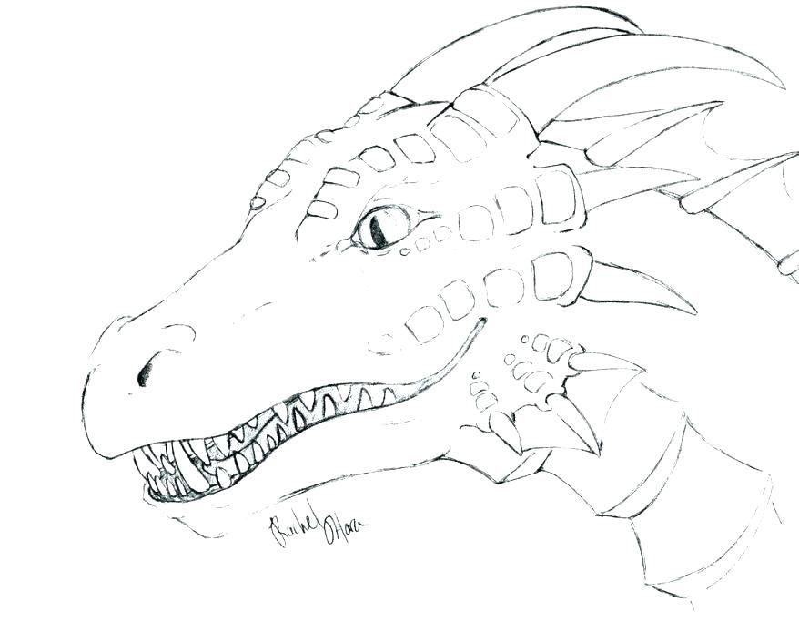 Found On Bing From Markholland Co Realistische Drachen Drachen Bilder Drachenzeichnungen