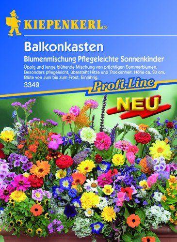 Balkonpflanzen Samen Balkonpflanzensamen Shoppingtipps